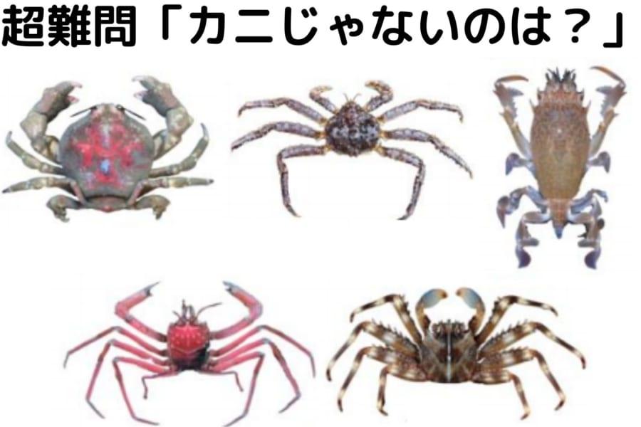 「カニ」への進化を繰り返した甲殻類の系譜が明らかに! タラバガニがヤドカリに分類される理由