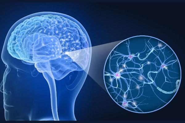 人間の脳は有機スーパーコンピュータだった 「0と1」で記憶を保存すると明らかに