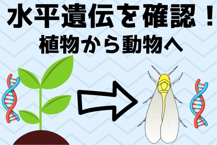 植物の遺伝子を「食べる」ことで獲得した昆虫を発見! 植物から動物へ遺伝子が水平伝播する