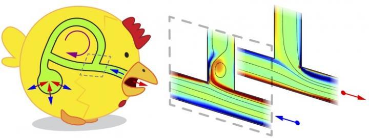 鳥の肺のデフォルメされたイメージ。青矢印が吸気、赤矢印が排気。