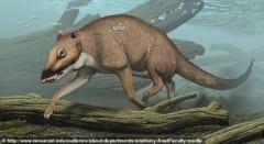 クジラの祖先の「インドハイアス」