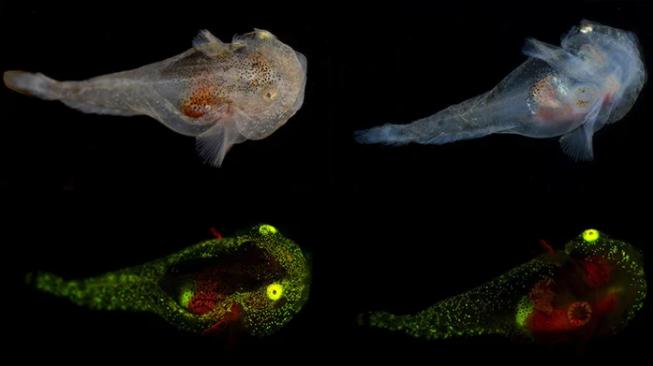 北極初の光る生物を発見