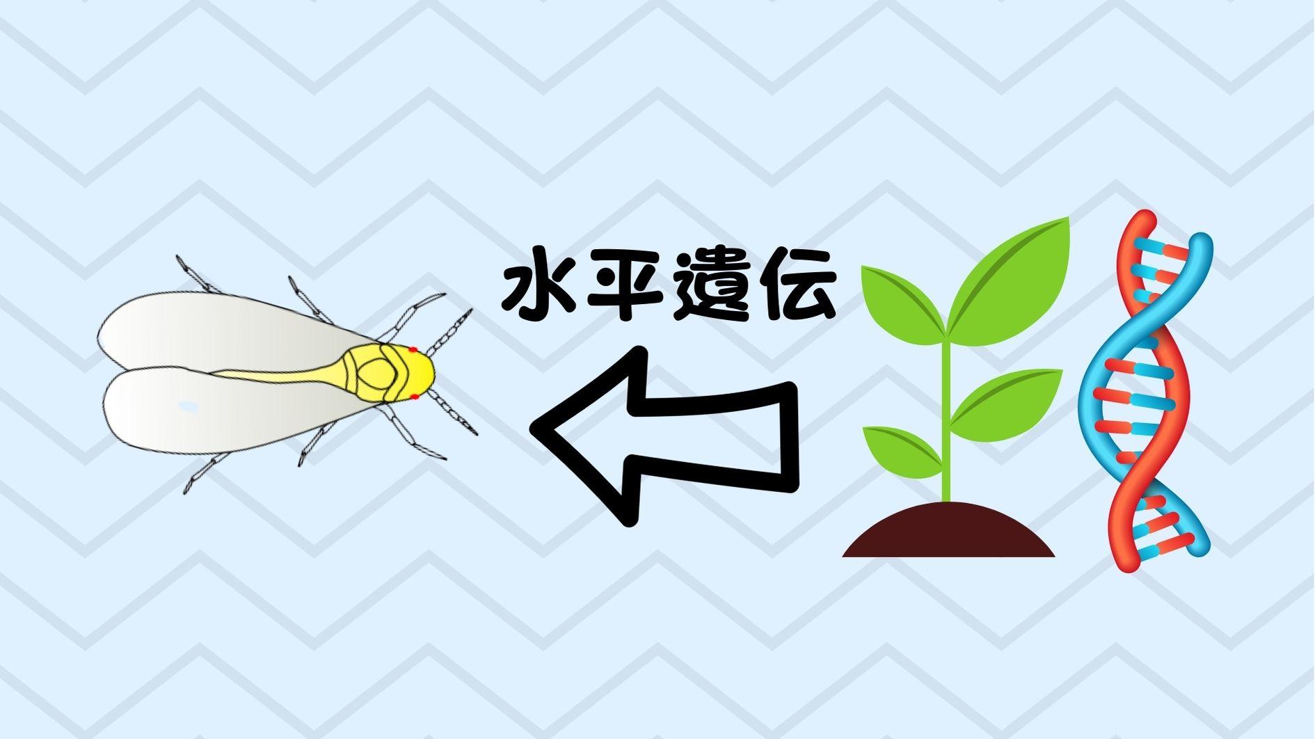 植物から動物への水平遺伝が確認された!