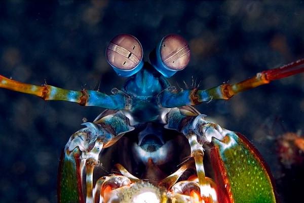 シャコの目にインスパイアされた超高性能カメラが開発される シャコは「偏光」を感知する特殊な生き物