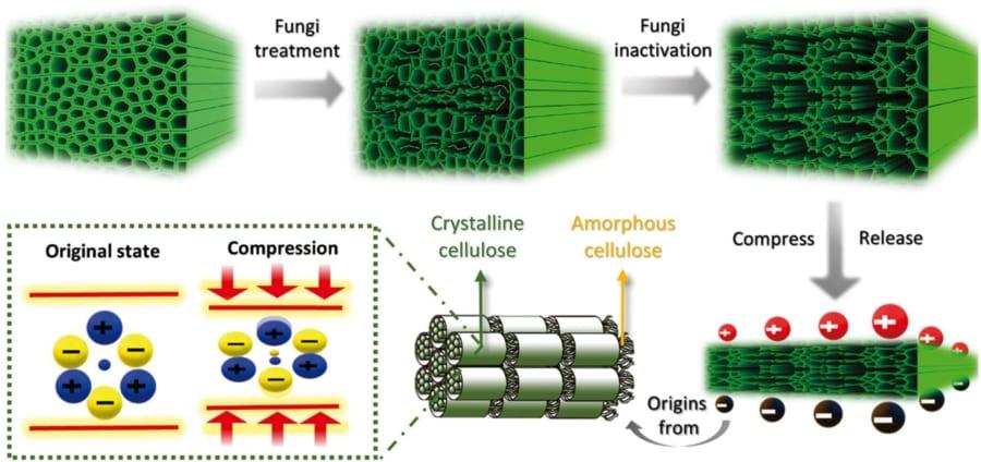菌によって木材の成分を分解させる