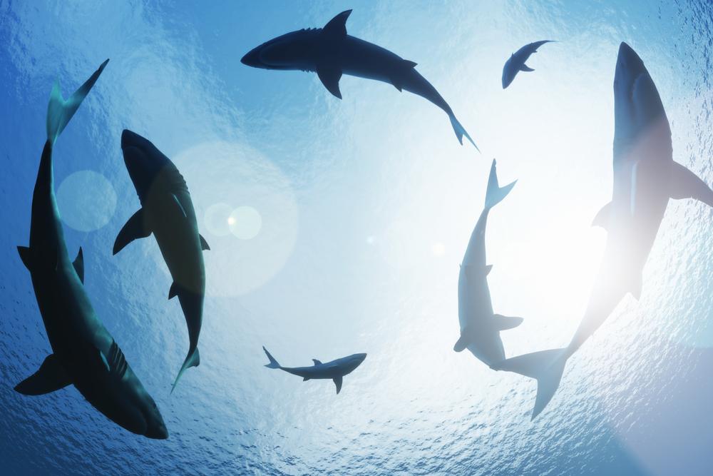 サメの旋回行動