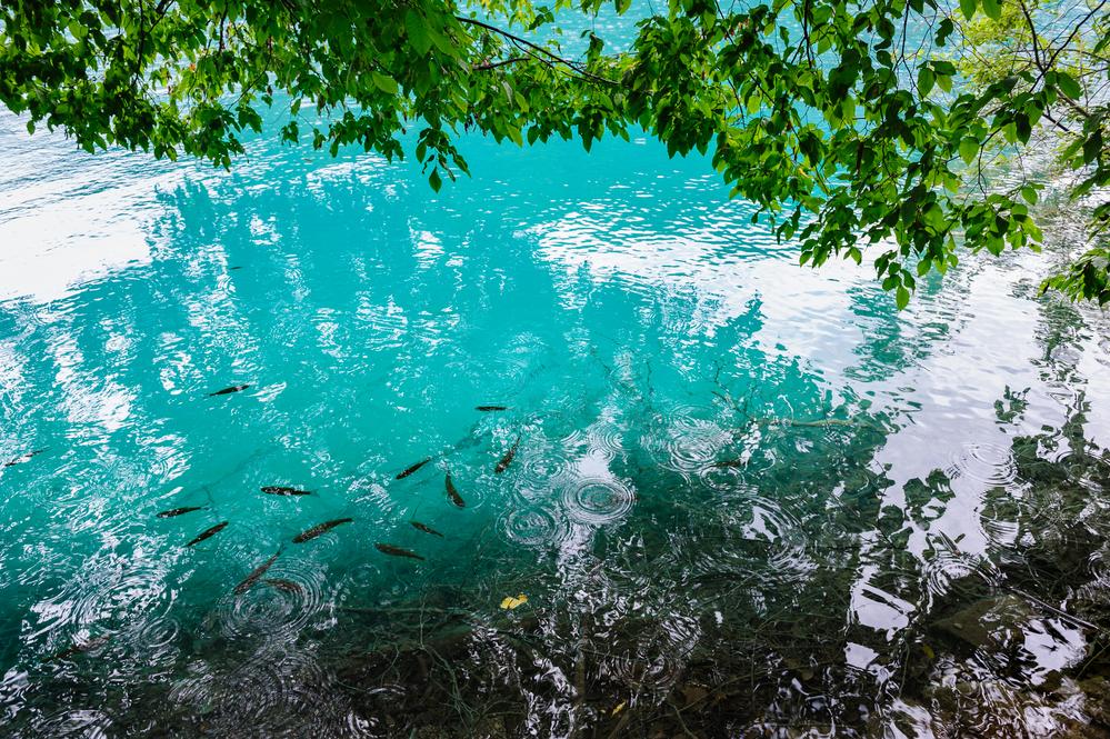 川魚のサイズは森から降る昆虫の量で変わっていた⁈