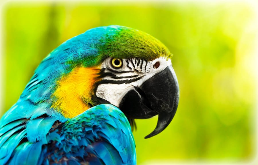 なぜ鳥は進化の中で「歯」を捨てたのか?