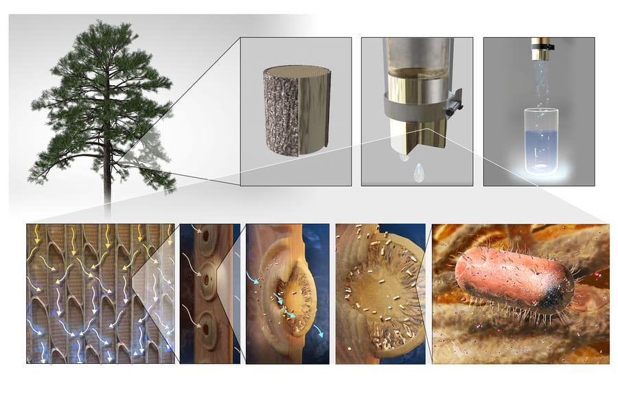 「どこにでもある木の枝」で作れる浄水フィルターが多くの命を救うかもしれない 99%有害なバクテリアを除去