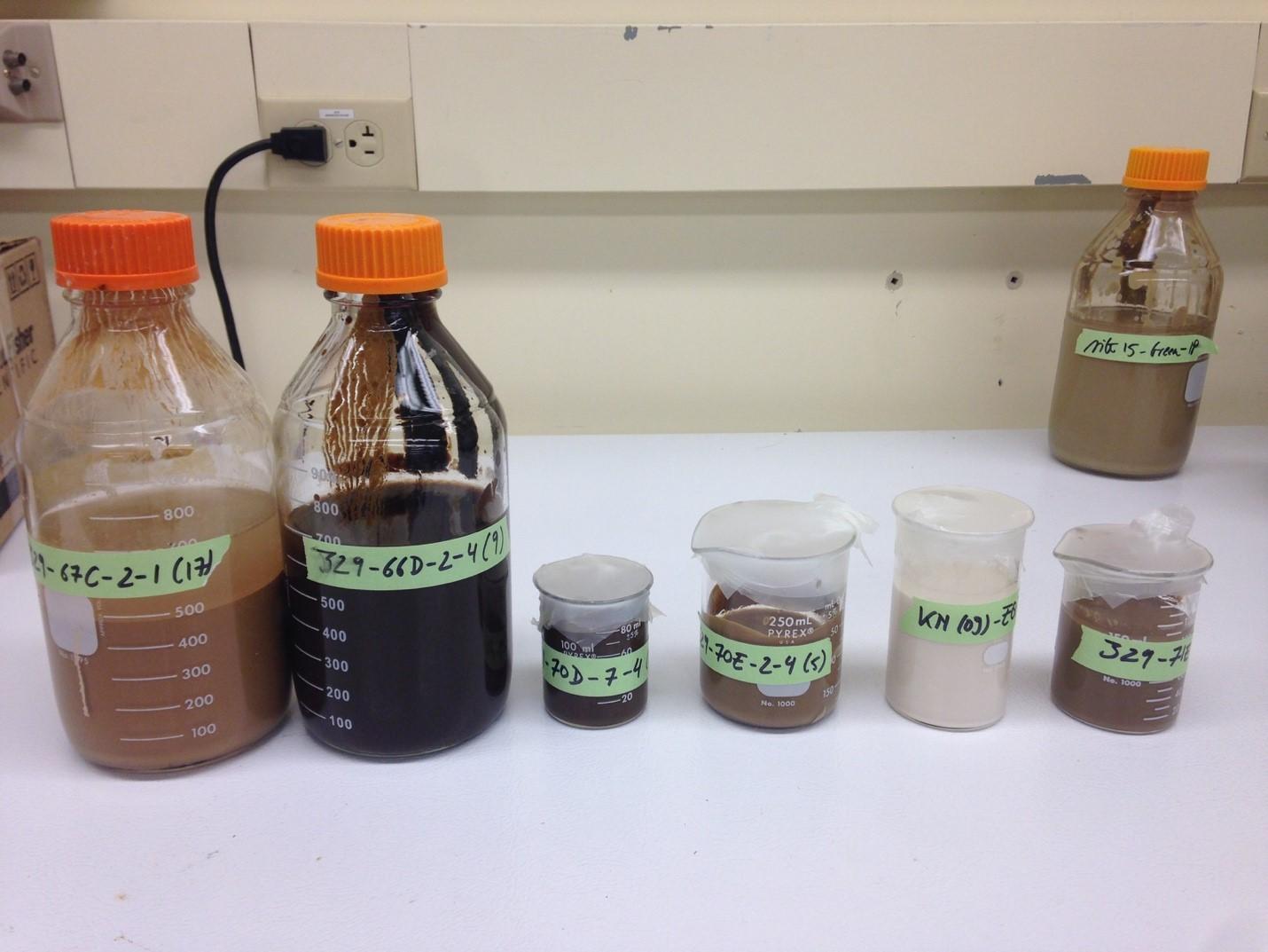 照射実験で使用した海底堆積物サンプル。