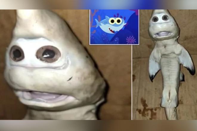 お化けのような「人面ザメ」がインドネシア沖で捕獲される、地元漁師も困惑