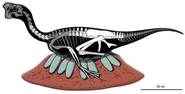 親の骨と卵が一緒に化石化していた