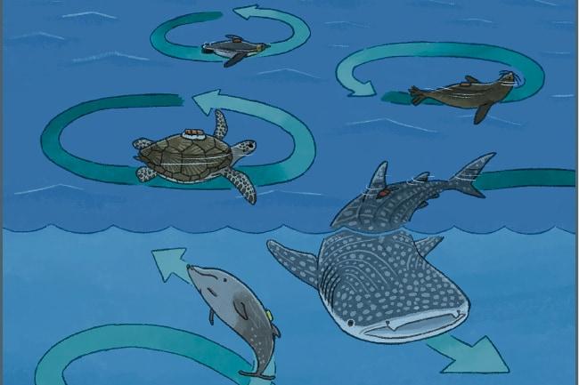 ウミガメは「旋回遊泳」で地磁気から位置情報を得ていた? 海の生き物がなぜ円を描いて泳ぐのか解明