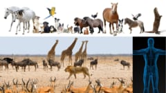 10億年後、私たちに馴染みのある全ての動物と植物がほぼ確実に地球から失われ、地球はふたたび細菌の支配する世界になる