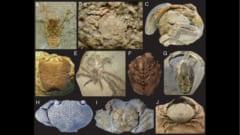 カニは2億5000万年前から存在する