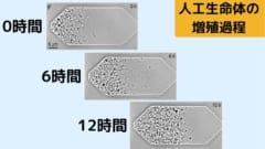 人工生命体「JCVI-syn3A」が増殖していく様子