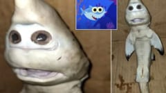世にも奇妙な「一つ目のアルビノサメ」が発見される! 海水温の上昇が奇形症の原因か(インドネシア)の画像 4/4