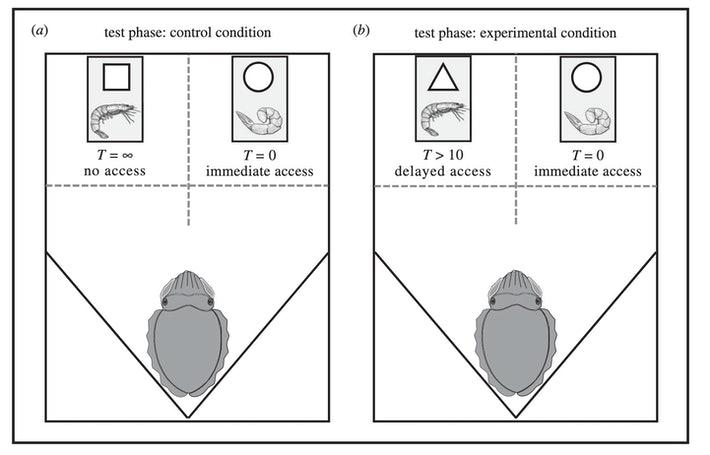 実験のイメージ図