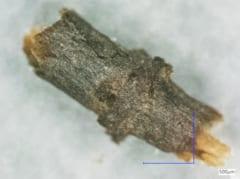 一見普通の木に見えるが、これは何十万年も前の木の化石。