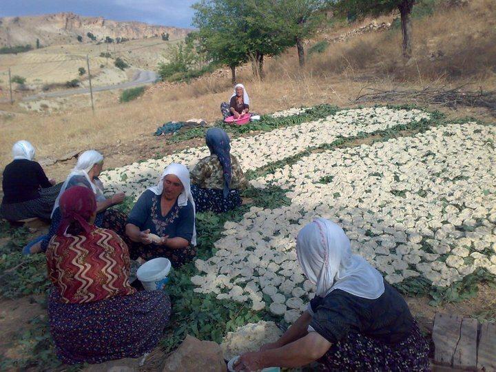 トルコの村でクルトを作っている女性たち