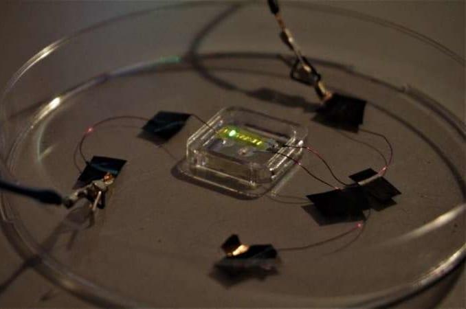 発光ダイオードを使った「スマートタトゥー」が開発される 光で体調を知らせてくれる未来が来る?