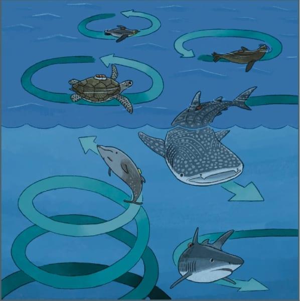 一部の海洋生物は円を描くように泳ぐ