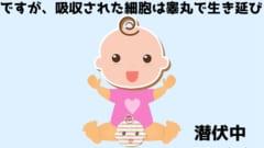 だが運悪く、吸収された細胞は睾丸で生き残り精子を作る細胞になっていた