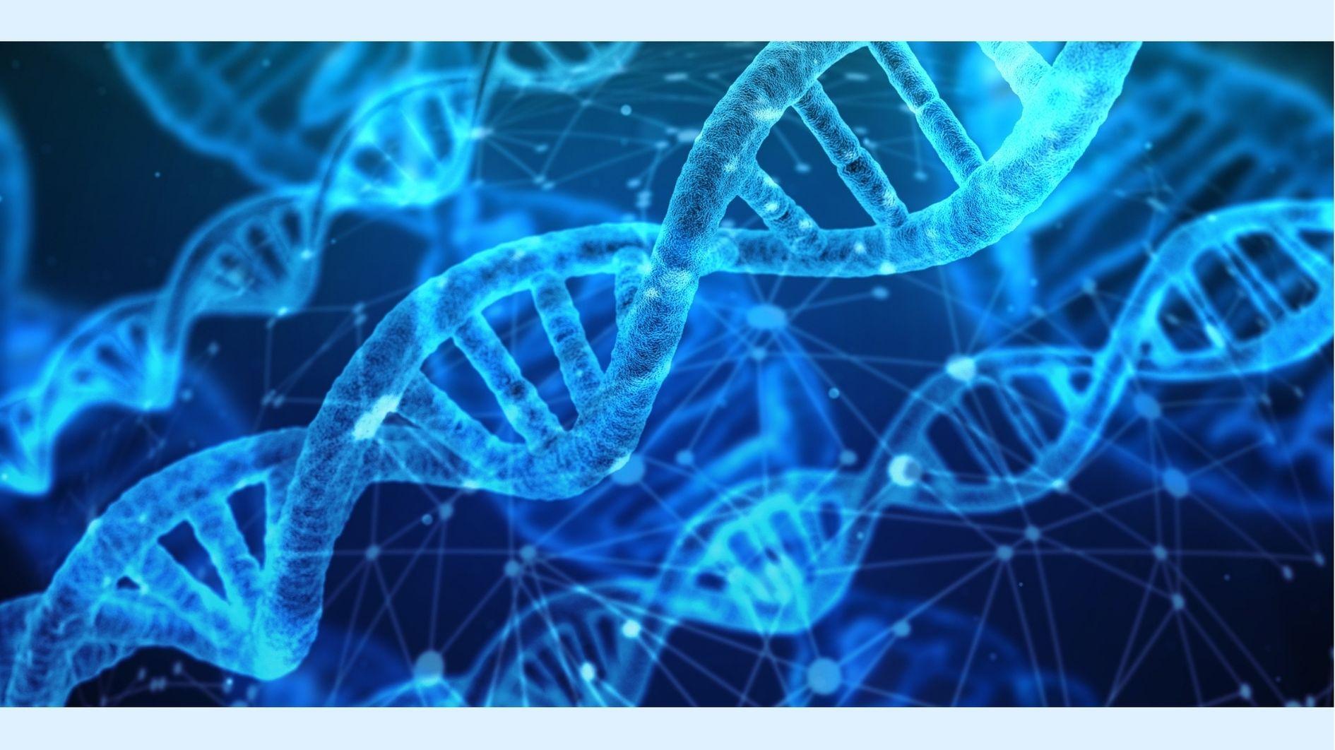 遺伝子アルファベットに「Z」を持つ複数のウイルスを確認!
