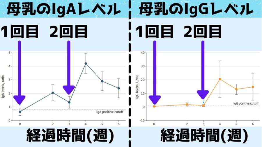 IgAは最初の接種から2週間目にはもう確認されたが、IgGのほうは2回目の接種である3週目まで時間がかかった
