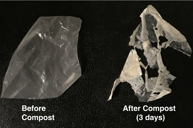 ポリエステルを食べる酵素が入ったプラスチック、水と熱だけで分解できる?!