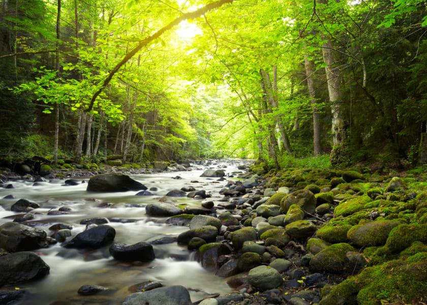 やはり自然音は「最良の薬」だった。 聴くだけで、ストレスや痛みを緩和すると明らかに