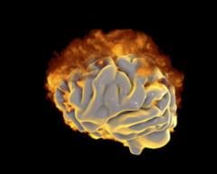 クジラの脳には3つの熱生成システムがある