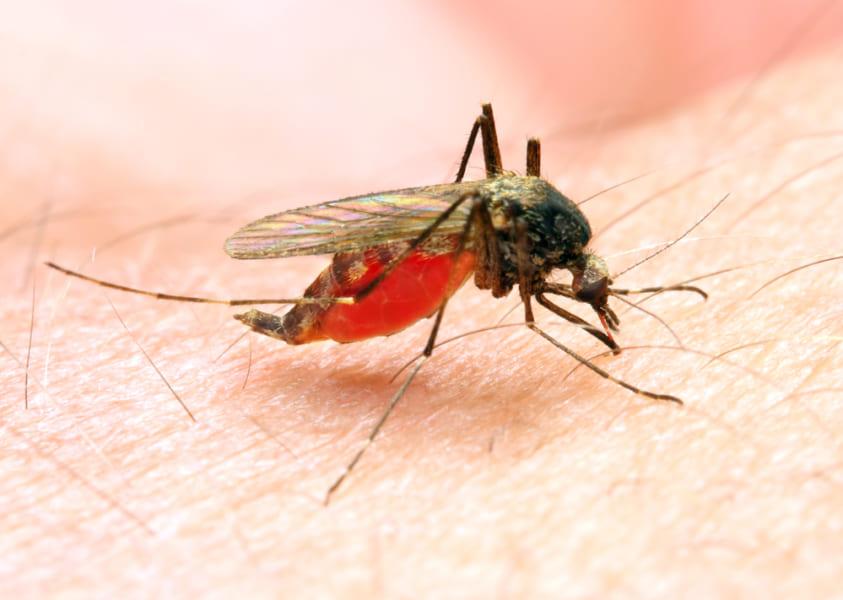 盗難車の中で「蚊が吸っていた血」から犯人のDNAを採取し逮捕に成功