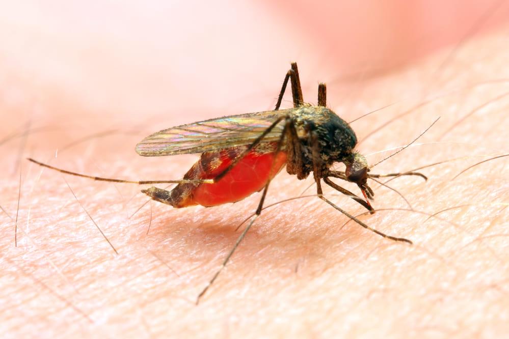 蚊が吸っていた血から泥棒のDNAを採取