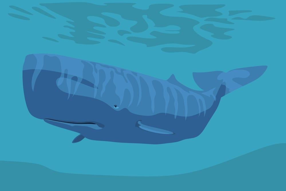 クジラやイルカの脳の大きさは熱生成のため