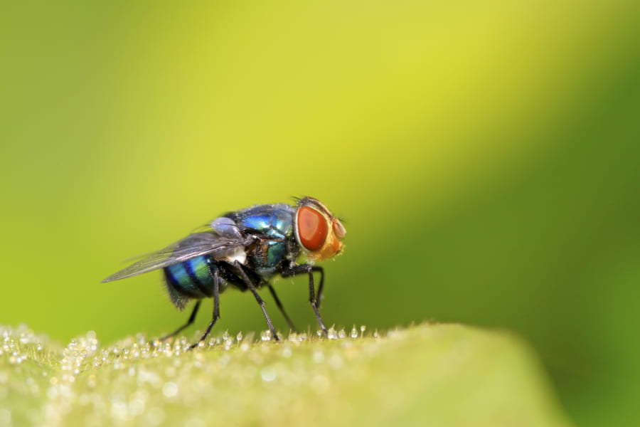 ハエ「人間はのろまだね〜」、身体の小さい生物のほうが「時間の流れ」が遅くなる