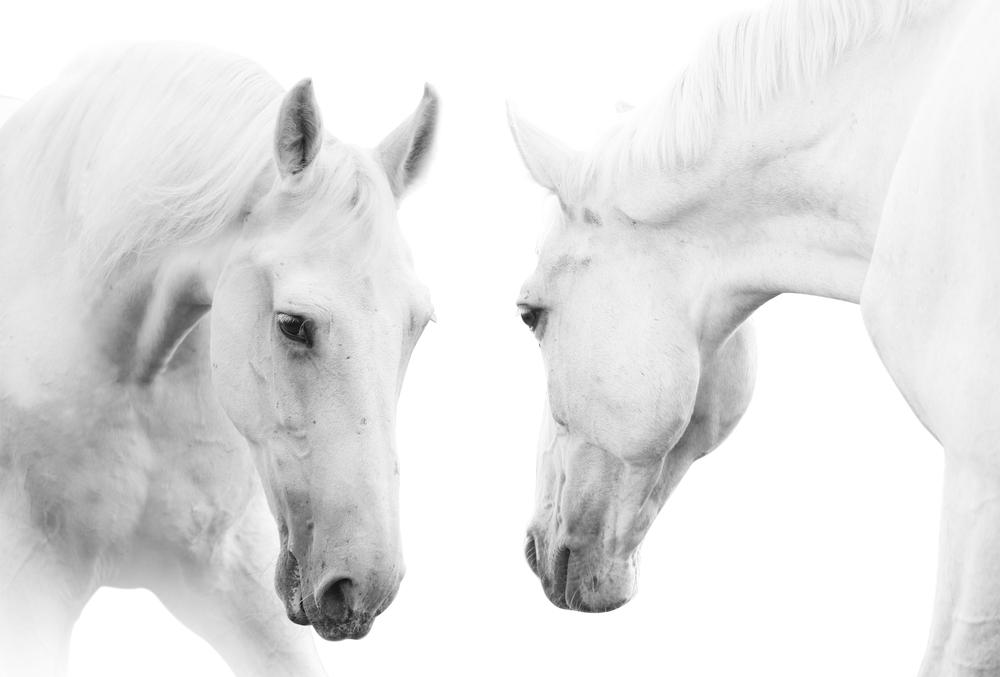 馬は種として「自己認識力」をもっている?