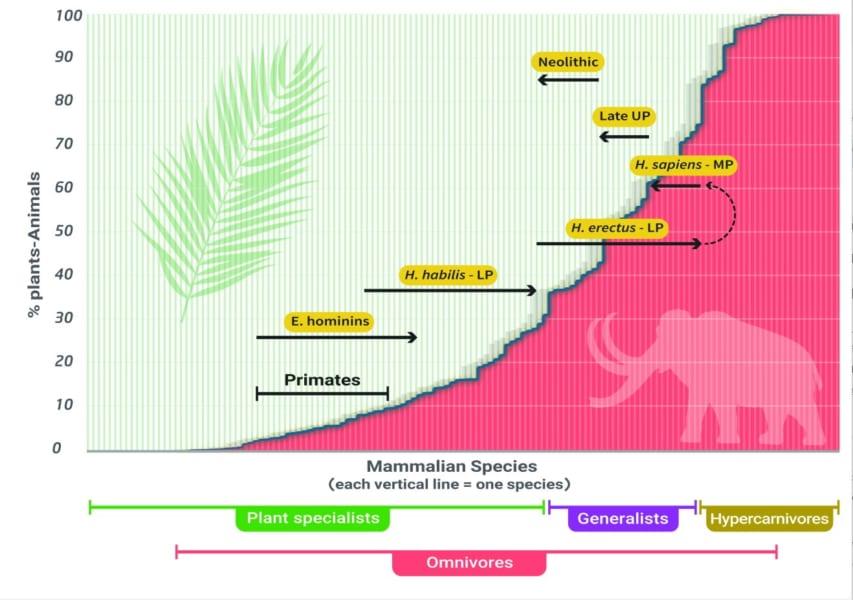 肉食・菜食比(縦)・動物の種数(横)、現生人類まで肉食に特化していたことが分かる