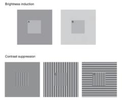 (上)明るさ誘導画像 , (下)コントラスト抑制画像