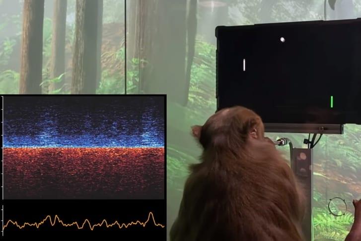 脳内チップを装着したサルが「思考」だけでゲームする様子を公開