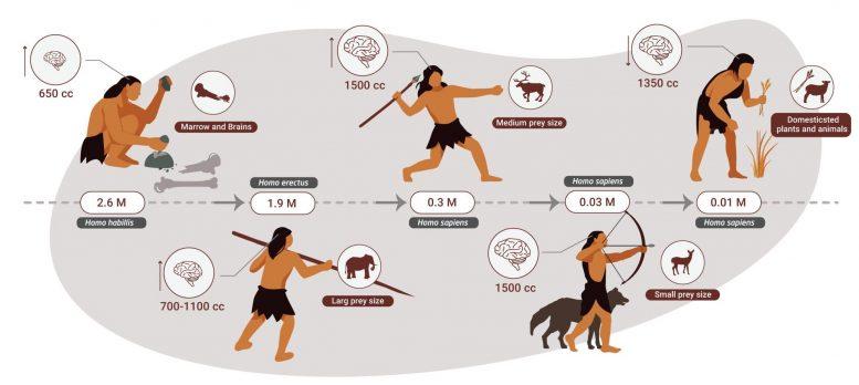 260万年前からの進化の流れ