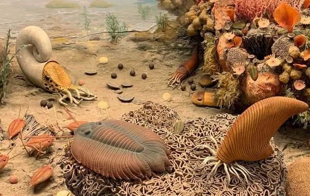 4億5000万年前の海の生き物が呼吸をどうしていたのか?
