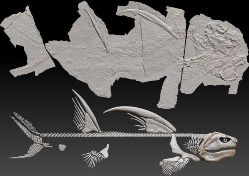 7年間「ゴジラザメ」の愛称で親しまれた古代ザメ、ついに新種と明らかに