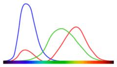 各錐体細胞と可視光スペクトルの大まかな相関図