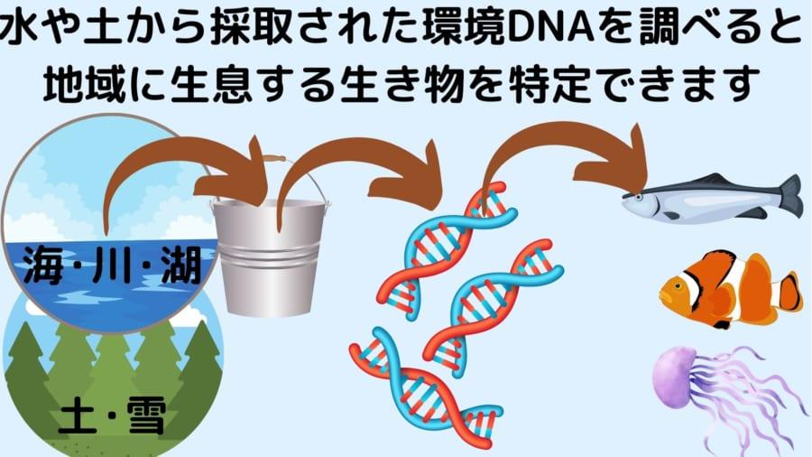 土壌や水中から環境DNAを取り出せるようになってきた