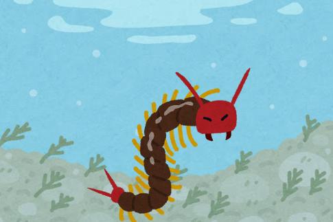 日本初「潜水する巨大ムカデ」が見つかる(ムシ注意)