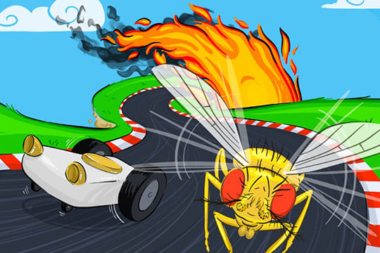 完全自動運転の実現に、ハエの熱源感知能力が利用できる?