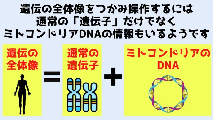正確な遺伝子治療を行うには核DNAに加えてミトコンドリアDNAの編集も必要になる