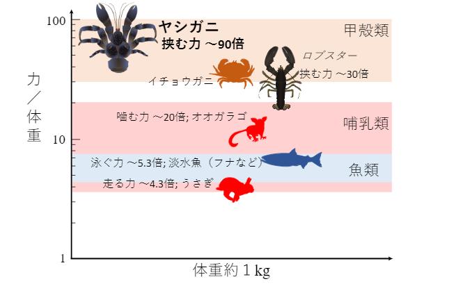 体重1kgでの単位体重あたりの最大力の比較