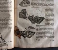400年近く前の古書に蝶を発見